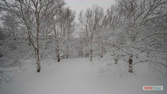 Soft Snow: Local Park - Webster, NY